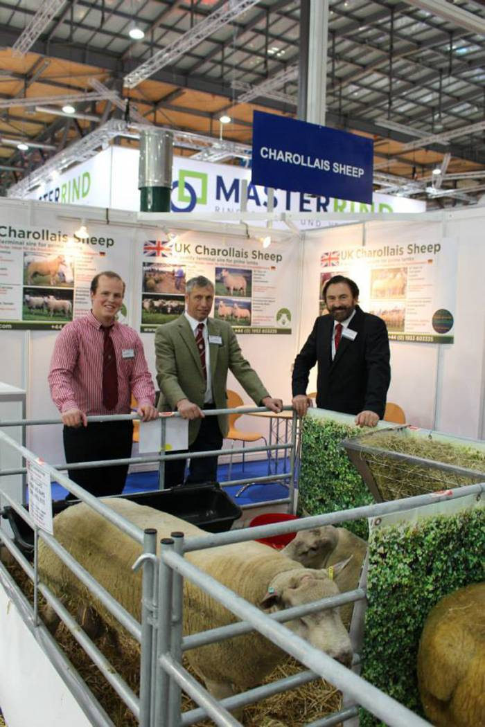 Logie Durno Sheep at Eurotier 2014 In Germany
