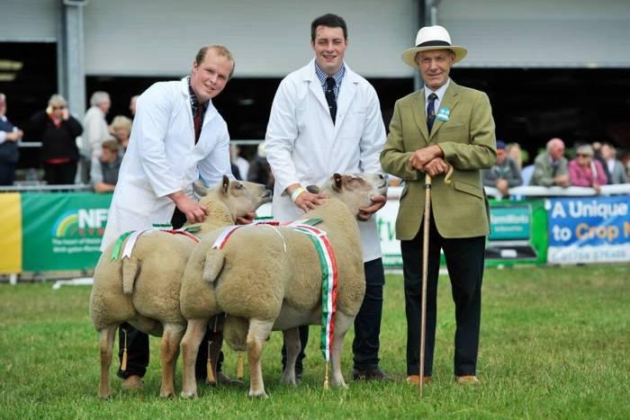 Royal Welsh Interbreed Pairs Champion 2015