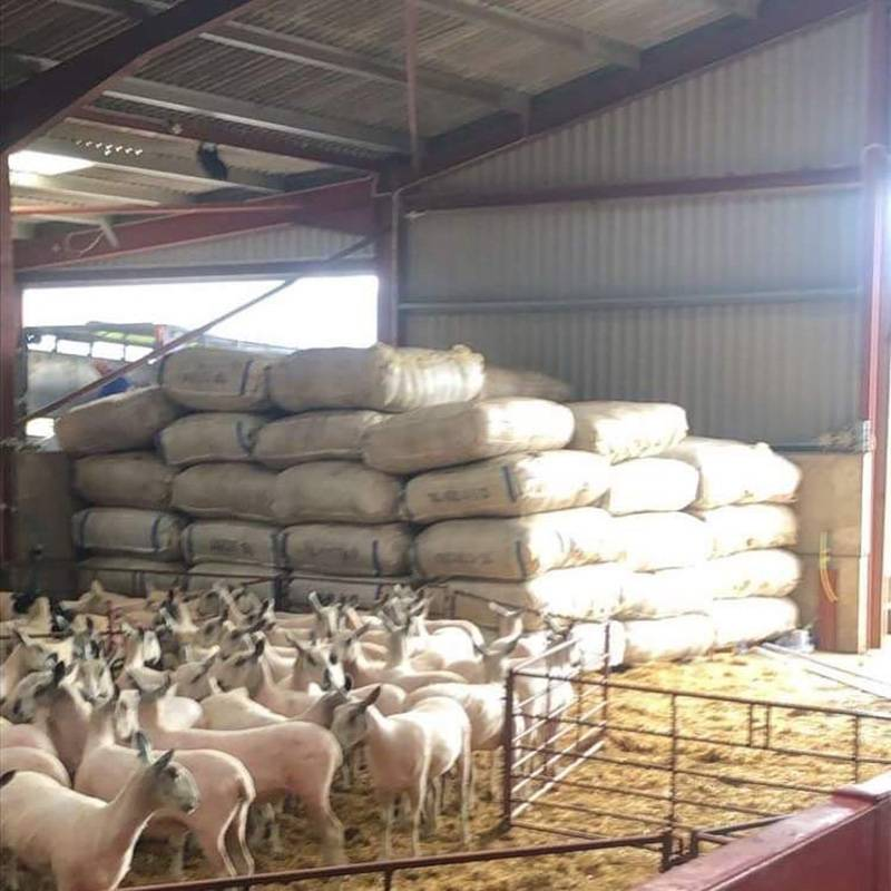 wool bags after first two days of shearing